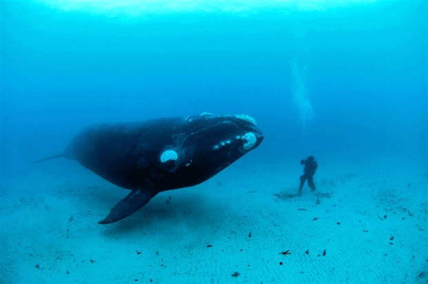 Photograph-of-big-whale