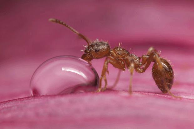 animal-photography-ant-closeup