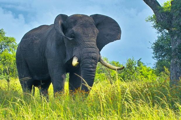 animal-photography-elephant-wild-life
