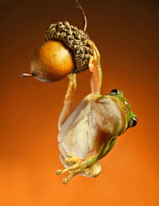 animal-photography-frog