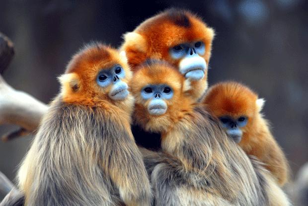 animal-photography-monkey