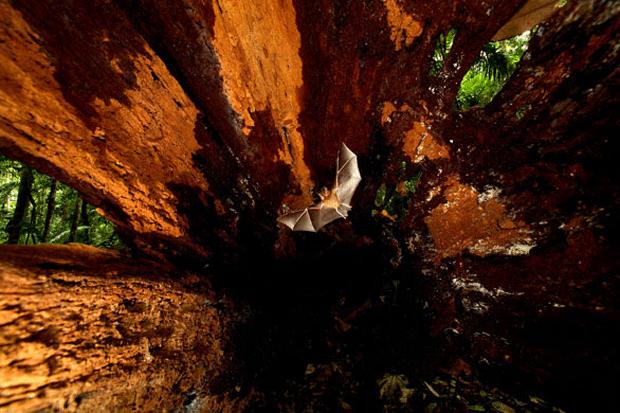 animal-photography-wildlife-bat