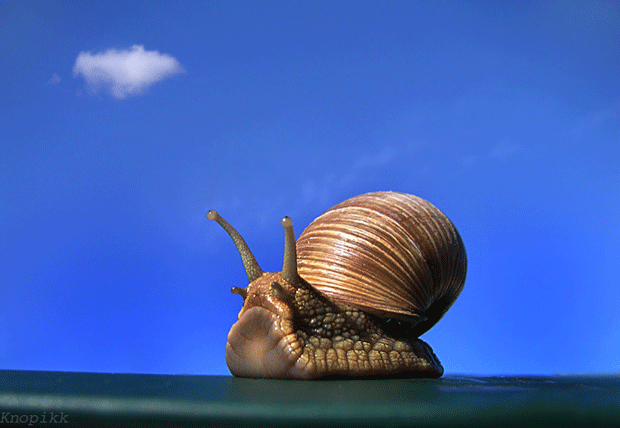 animal-snail-photography