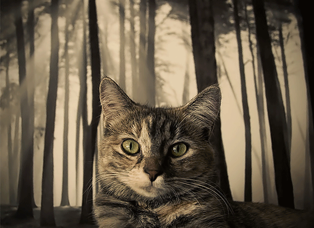 beautiful-Animal-photography-cat