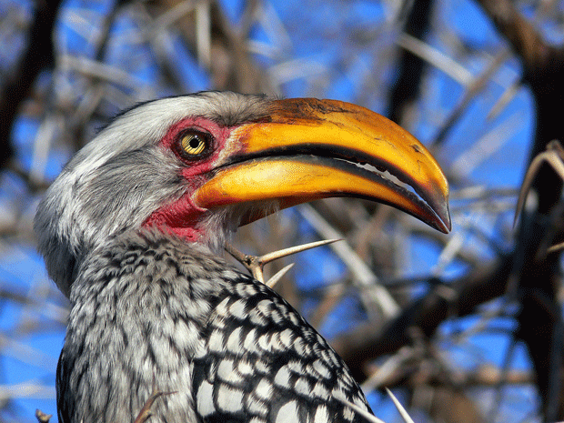 beautiful-animal-photos-bird