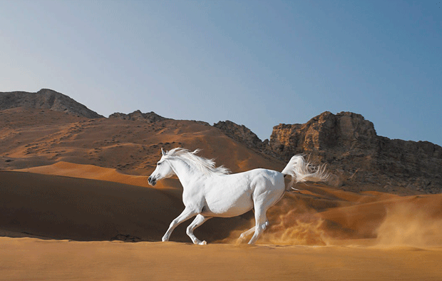 beautiful-animal-photos-horse