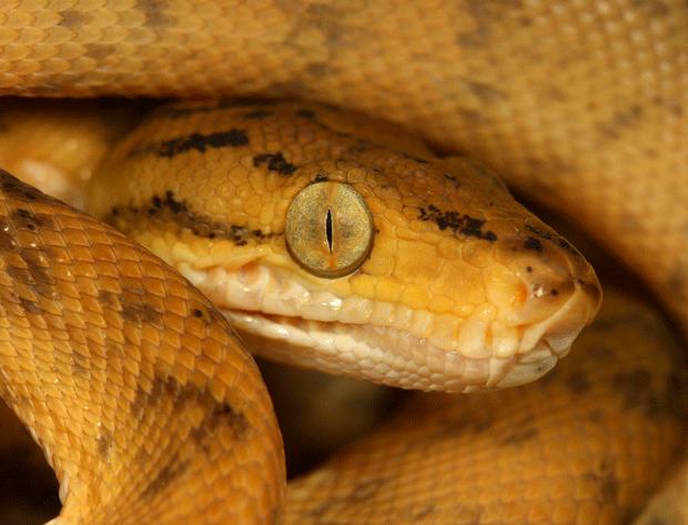 snake_macro_by_macrojunkie-photography